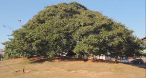 copaiba-passeio-historia